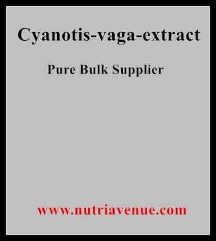 Cyanotis Vaga Extract
