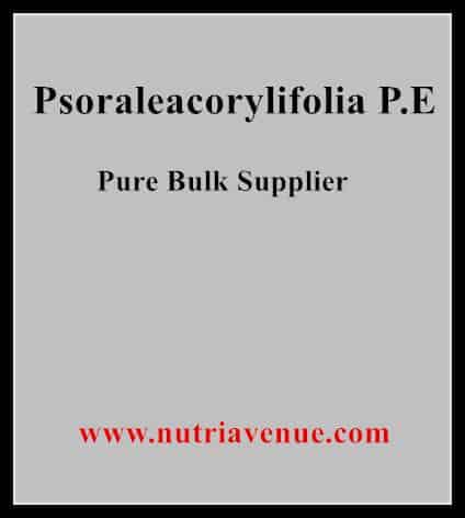 Psoraleacorylifolia P.E.