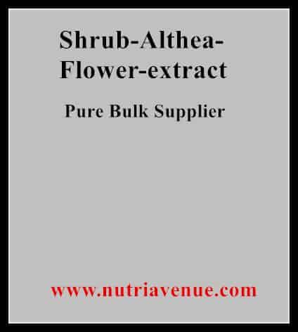 Shrub Althea Flower