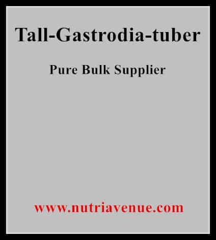 Tall Gastrodia Tuber
