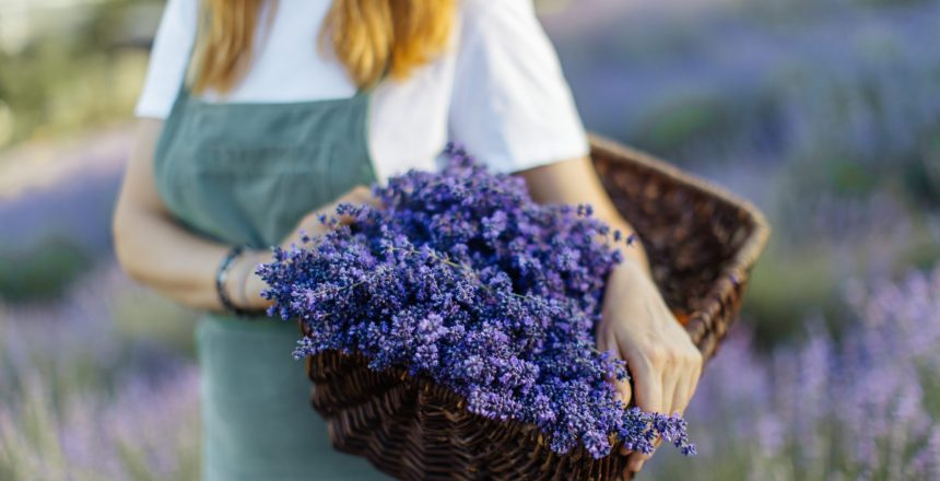 Lavender extract contains antifungal compound